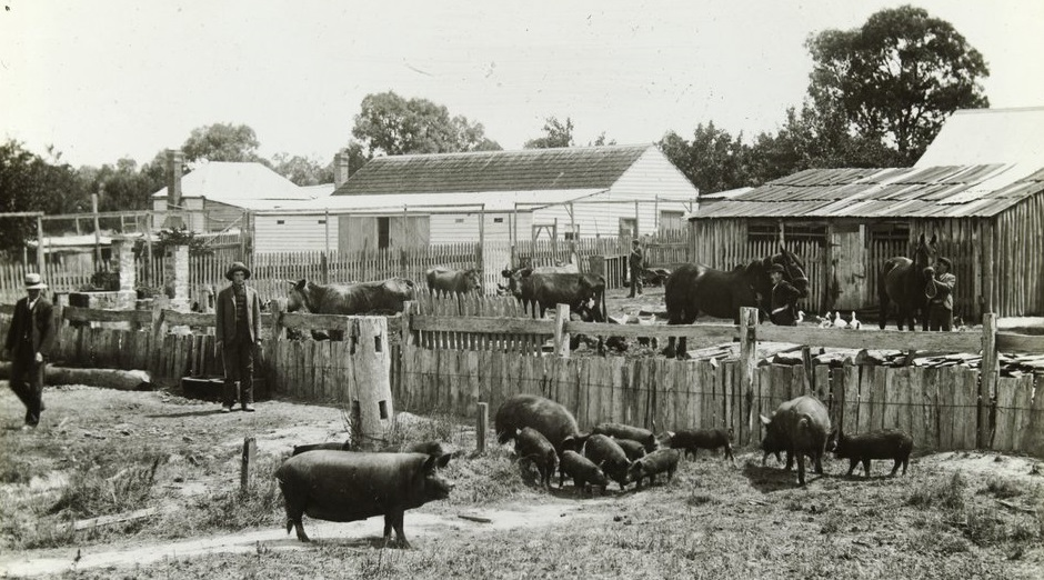 Farmers: Clifden Farm and Try Boys Home at Wedderburn, Victoria.